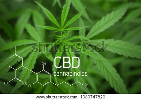 Cannabis Picture of  Formula CBD