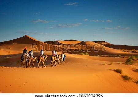 Sahara desert camels trekking tours with berbers adventure dromadaires riding and berber guiding excursion  in Merzouga Dubai, Oman, Bahrain Morocco or Kuwait dunes safari #1060904396