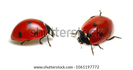 Ladybugs isolated on white background Royalty-Free Stock Photo #1061197772