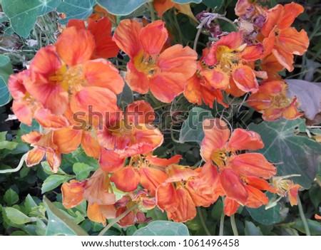 beautiful flower plant #1061496458