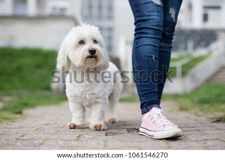 Girl walking with white fluffy dog #1061546270