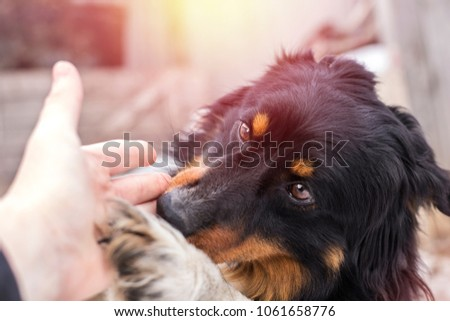 A small stray dog licks a human hand, on the street  #1061658776