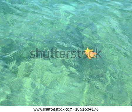 Dry yellow leaf floating on a blue sea water surface #1061684198