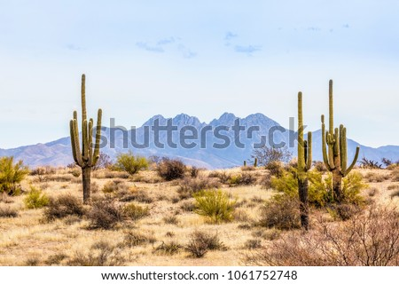 Four Peaks, a prominent landmark of the Mazatzal Mountains on the eastern skyline of Phoenix, Arizona, is framed by tall saguaro cacti in the desert. #1061752748