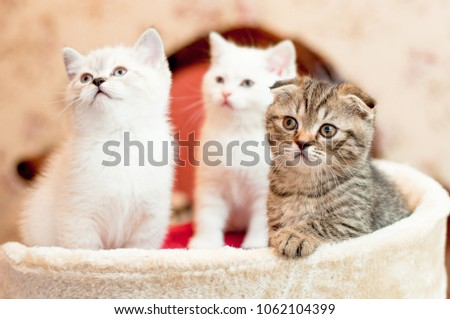 three kittens two white and one gray are sitting indoors #1062104399