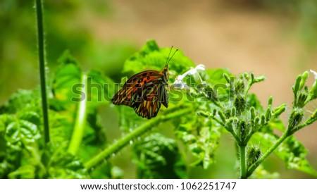 Tropical butterflies on flowers #1062251747