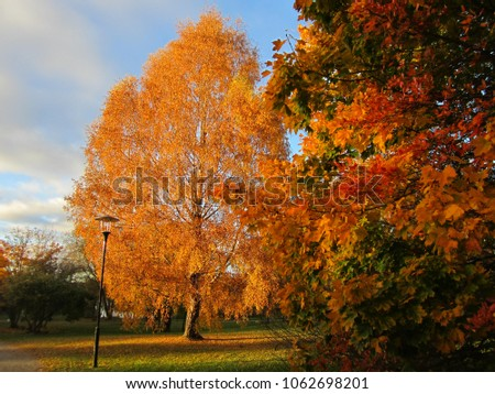 Autumn leaves in Sweden #1062698201