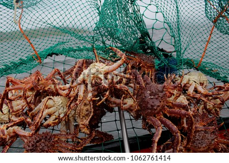 Landscape picture of a crab pot full of king crabs, captured in Kirkenes, North Norway