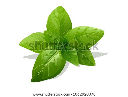 Green Basil Isolated On White Background  #1062920078