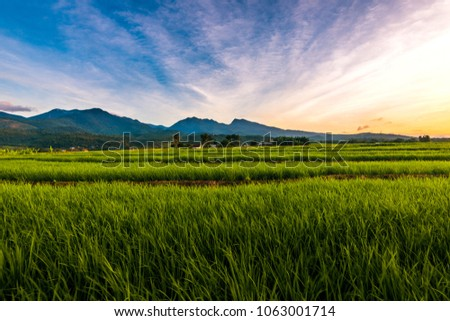 Beautiful farm rice fields in Flores Indonesia #1063001714