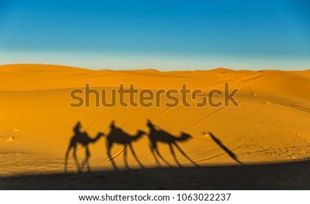 shadow of a camel caravan on sahara sands #1063022237