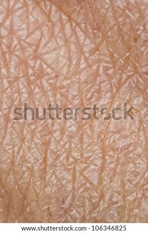 Human Skin - part of a finger #106346825