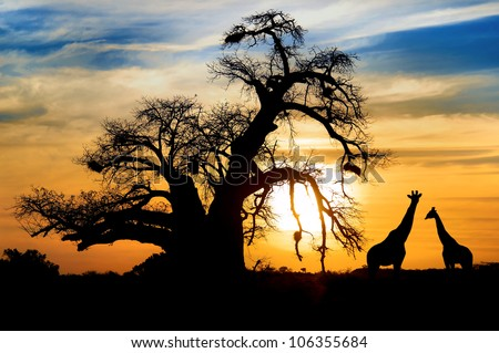 Spectacular sunset with baobab and giraffe on african savannah Royalty-Free Stock Photo #106355684
