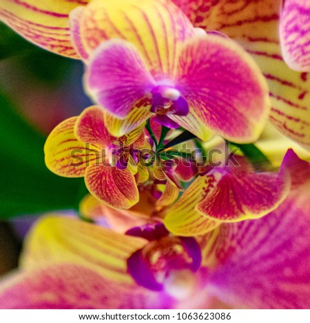 Creative background artwork design from orchid flowers #1063623086
