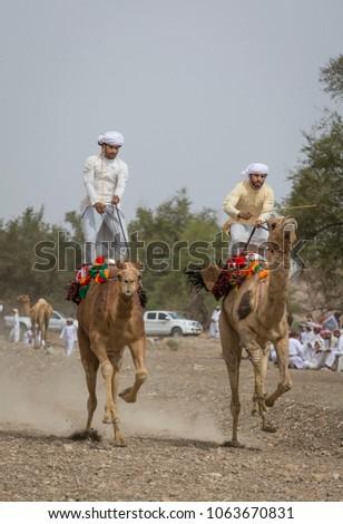 Ibri, Oman, April 7th, 2018: omani men racing on camels #1063670831