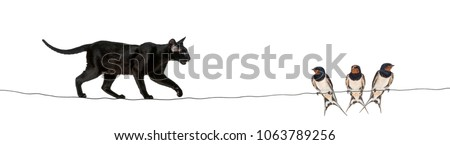 Barn Swallow, Hirundo rustica, perched as cat approaches on a wire against white background Royalty-Free Stock Photo #1063789256