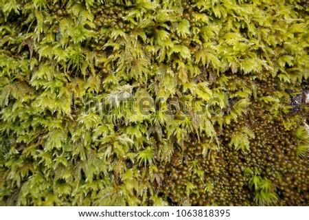 Strange looking moss close up and macro #1063818395
