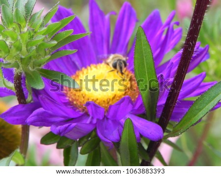 beautiful flower growing in the middle latitudes #1063883393