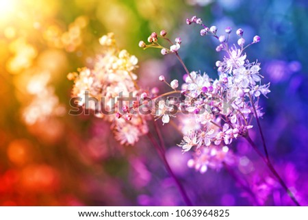 Small white flowers on a toned on gentle soft multicolor background outdoors close-up macro.Romantic soft gentle artistic image, free space for text.