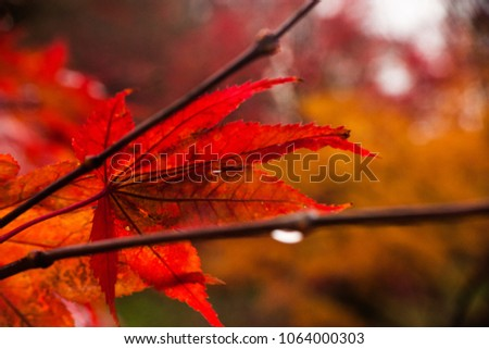 Fall with all his colors #1064000303
