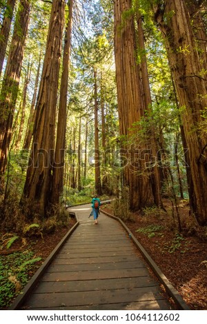Muir woods National Monument near San Francisco in California, USA #1064112602