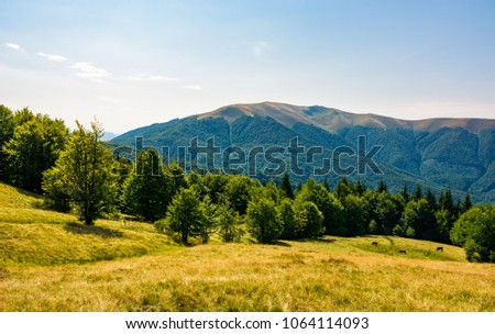 beech forest on grassy meadows in mountains. beautiful Landscape at the foot of Carpathian mountain Apetska #1064114093