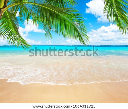 Coconut palm trees against blue sky and beautiful beach in Punta Cana, Dominican Republic. Vacation holidays background wallpaper. View of nice tropical beach. #1064311925