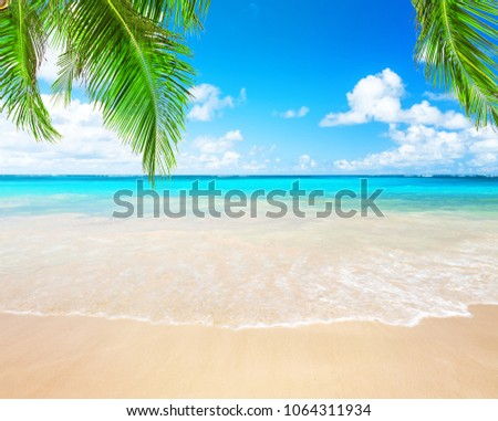 Coconut palm trees against blue sky and beautiful beach in Punta Cana, Dominican Republic. Vacation holidays background wallpaper. View of nice tropical beach. #1064311934