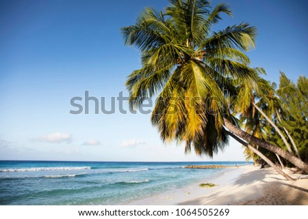 Summer. Exotic vacations. Palm trees. Turquoise water. Sunny blue sky. Beautiful white-sand beach.  #1064505269