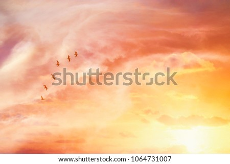 surreal enigmatic picture of flying birds in sunset or sunrise sky . minimalism and dream concept
