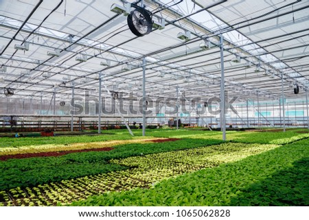 Modern hydroponic greenhouse with climate control system for cultivation of flowers and ornamental plants for gardening. #1065062828