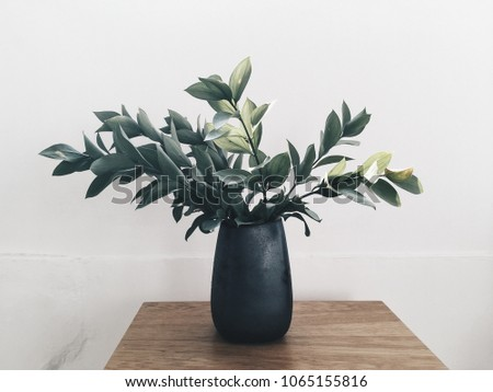 Black vase with green leafs plant at wooden table at white wall background #1065155816