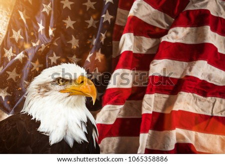 North American Bald Eagle with American flag. Patriotic concept.