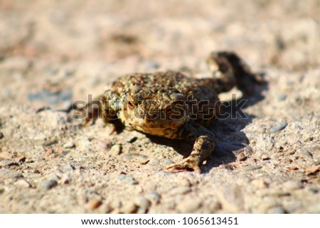 Frog on land #1065613451