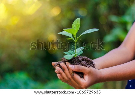 Earth Day In the hands of trees growing seedlings. Bokeh green Background Female hand holding tree on nature field grass Forest conservation concept #1065729635