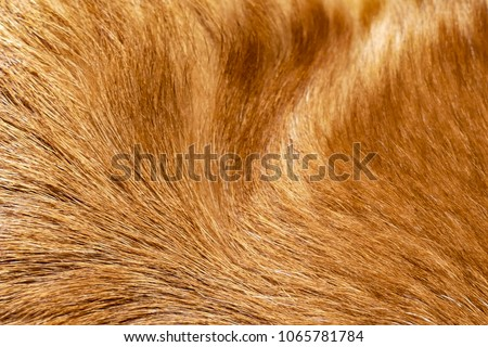 Close up of shiny healthy dog fur for a background #1065781784