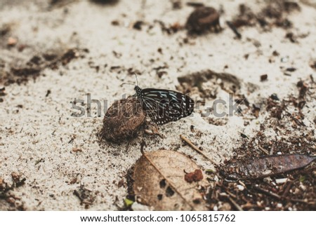 a black and white butterfly sits on a small pebble #1065815762