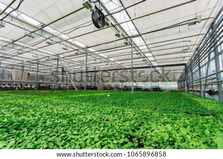 Modern hydroponic greenhouse with climate control system for cultivation of flowers and ornamental plants for gardening #1065896858