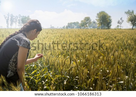 girl standing and touching the heads of wheat in a cultivated field  #1066186313