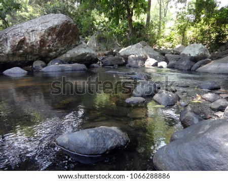 pure stream water running into the forest  #1066288886