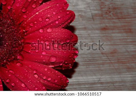 Awesome and beautiful Red Flower Royalty-Free Stock Photo #1066510517