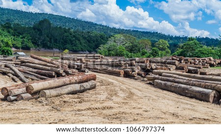 log yard of rain forest tropical hardwood on Mahakam riverbank, outback of Borneo, Indonesia. industrial and environmental background #1066797374