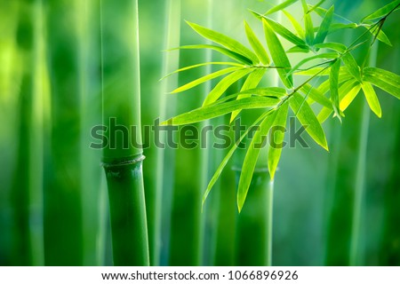 Asian Bamboo forest,natural background #1066896926