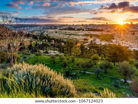 Amazing sunset over Jerusalem: panoramic view of Kidron Valley from the southern neighbourhoods to the Old City and Temple Mount; view from the Mount of Olives, with bushes and trees in the foreground #1067124023