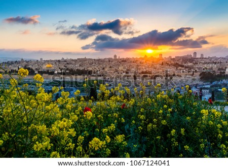 Beautiful sunset with a panorama of the Old City Jerusalem, from Mount Zion and the Temple Mount, to the muslim quarter and the high-rise buildings of the new city; with mustard flowers in foreground #1067124041