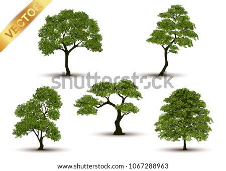 Beautiful tree Realistic  on a white background. #1067288963