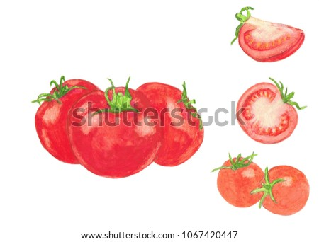 Tomatoes  watercolor illustration isolated on white background. Hand drawn painting. #1067420447