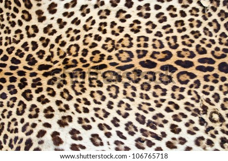 Tiger skin pattern closeup for background user