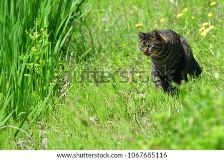 cat in green field #1067685116