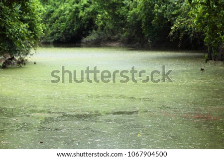 Background green with dirty river #1067904500